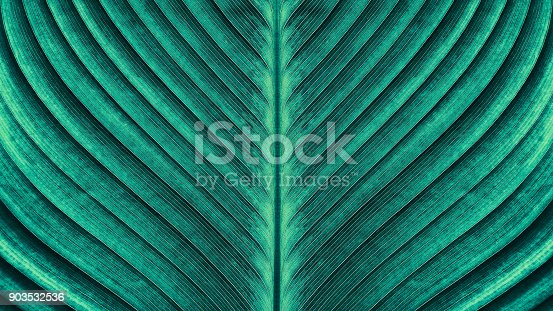 large palm leaf texture backgrounds, blue toned