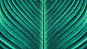 tropical palm leaf texture