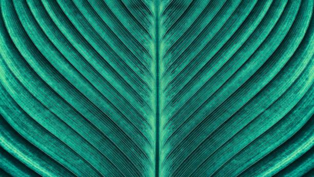 Tropical palm leaf texture picture id903532536?b=1&k=6&m=903532536&s=612x612&w=0&h=7ggmliganvfipzguxpciz14lkqo5zcvzbmkrimgwfka=