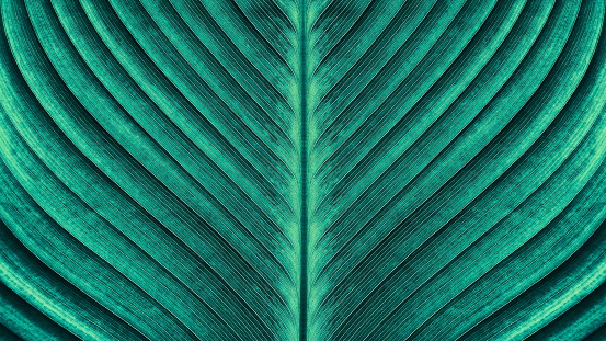 Tropical Palm Leaf Texture Stock Photo - Download Image Now