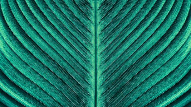 tropical palm leaf texture - lush foliage stock pictures, royalty-free photos & images