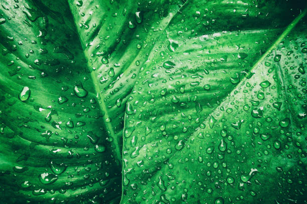 tropical palm leaf with rain drop - foliate pattern stock photos and pictures