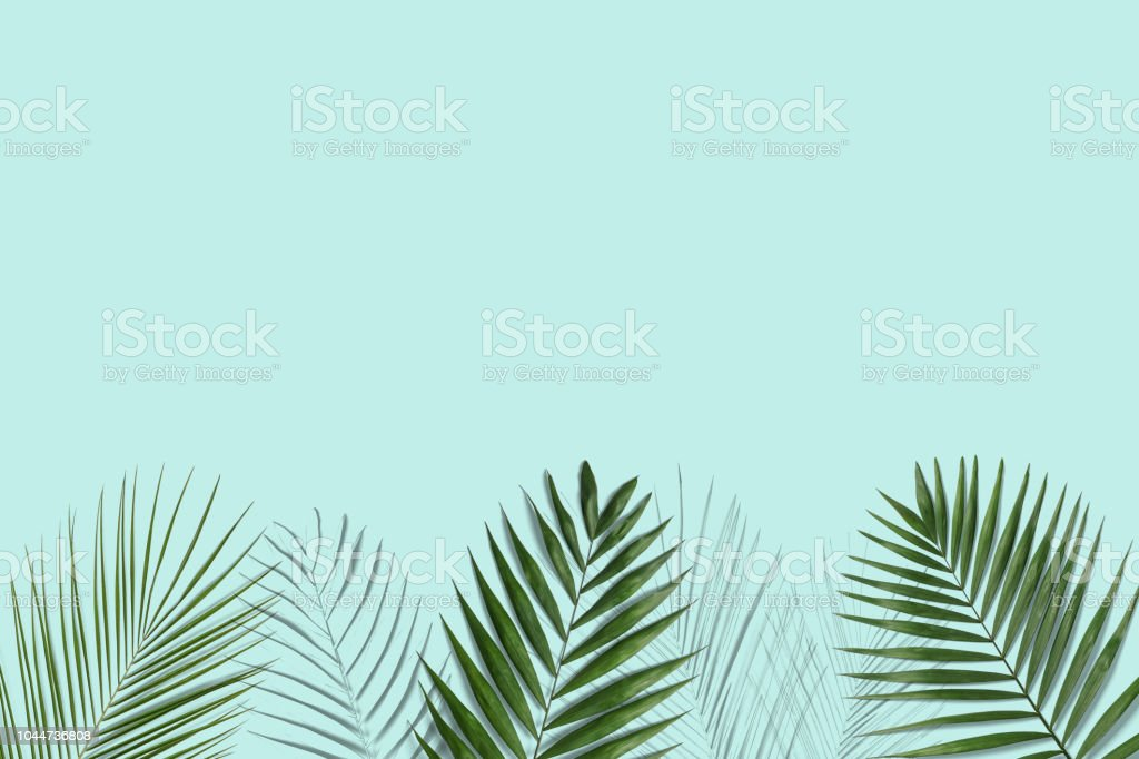 Tropical palm leaves on blue background for design - foto stock