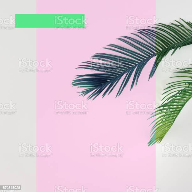 Tropical palm leaves on bright background summer minimal concept flat picture id670818028?b=1&k=6&m=670818028&s=612x612&h=ifzukffrxm71ll2whpdg6d4njdm9 gh14tbj3icofpo=