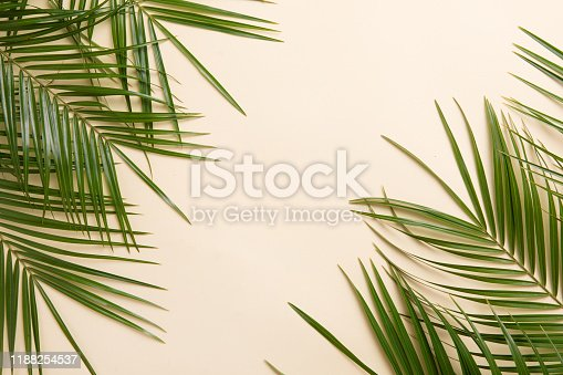 Tropical palm leaves on green background. Flat lay, top view
