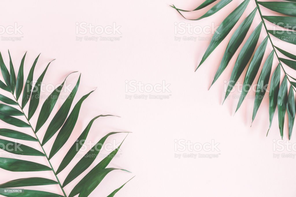 Tropical palm leaves on pastel pink background. Summer concept. Flat...