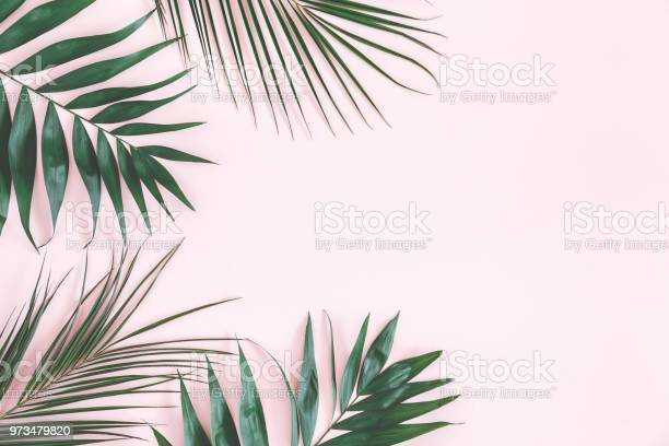 Tropical palm leaves on pastel pink background flat lay picture id973479820?b=1&k=6&m=973479820&s=612x612&h=khomgsvh8wzhn olqtdawa zpmhuj4tczvui2wmuwzc=