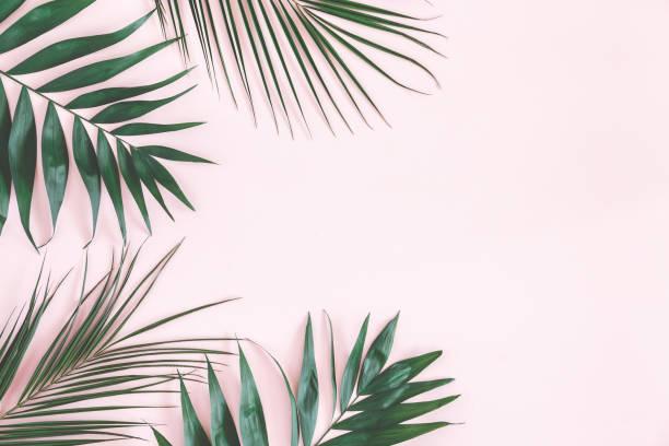 tropischer palmen blätter auf pastell rosa hintergrund. flach zu legen - farn stock-fotos und bilder