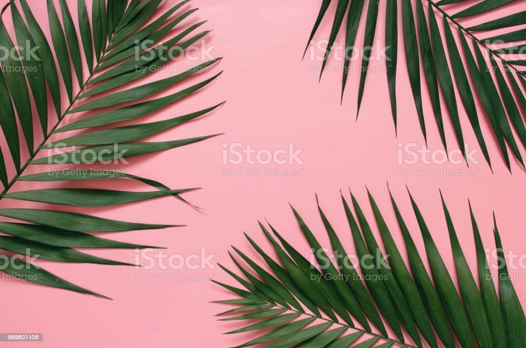 Tropical Palm Leaves On Pastel Pink Background Stock Photo Download Image Now Istock Tons of awesome background pink lucu to download for free. https www istockphoto com photo tropical palm leaves on pastel pink background gm989801406 268318793