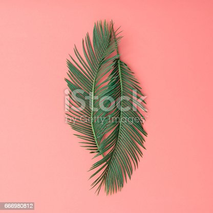 666980960 istock photo Tropical palm leaves on pink background. Minimal nature summer concept. Flat lay. 666980812