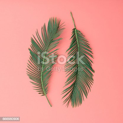 666980960 istock photo Tropical palm leaves on pink background. Minimal nature summer concept. Flat lay. 666980906