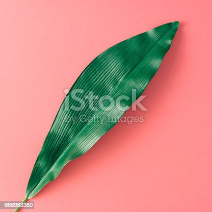666980960 istock photo Tropical palm leaves on pink background. Minimal nature summer concept. Flat lay. 666983380