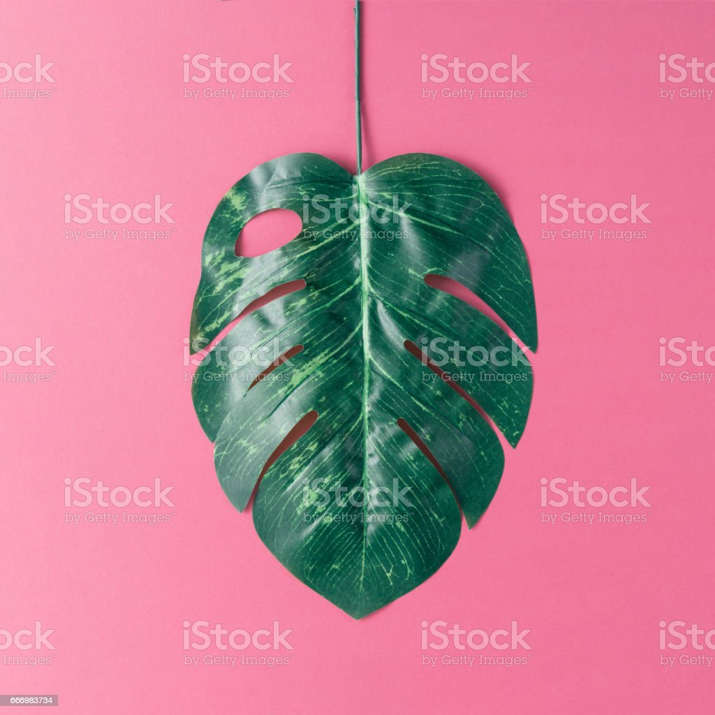 Tropical palm leaves on pink background. Minimal nature summer...