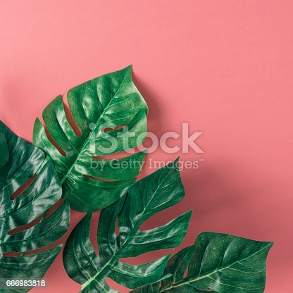 666980960 istock photo Tropical palm leaves on pink background. Minimal nature summer concept. Flat lay. 666983818