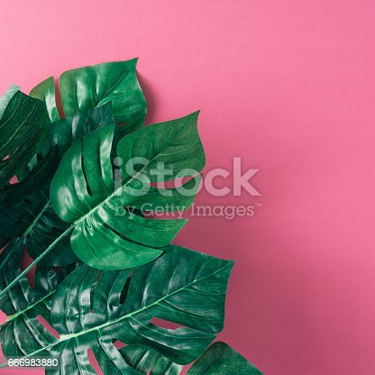 666980960 istock photo Tropical palm leaves on pink background. Minimal nature summer concept. Flat lay. 666983880