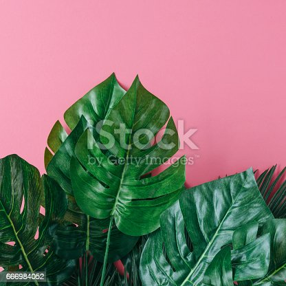 666980960 istock photo Tropical palm leaves on pink background. Minimal nature summer concept. Flat lay. 666984052