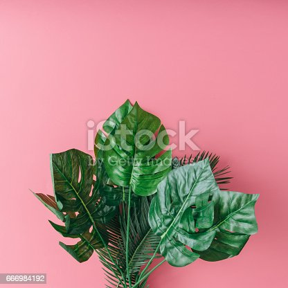 666980960 istock photo Tropical palm leaves on pink background. Minimal nature summer concept. Flat lay. 666984192