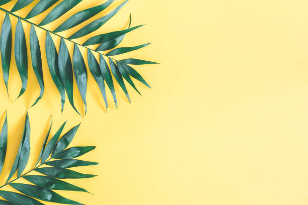 Tropical palm leaves on yellow background flat lay top view picture id977364180?b=1&k=6&m=977364180&s=612x612&w=0&h=zfvgalnw7haybjwddyx ps8gcyzs2zmfbhnysb qjx0=