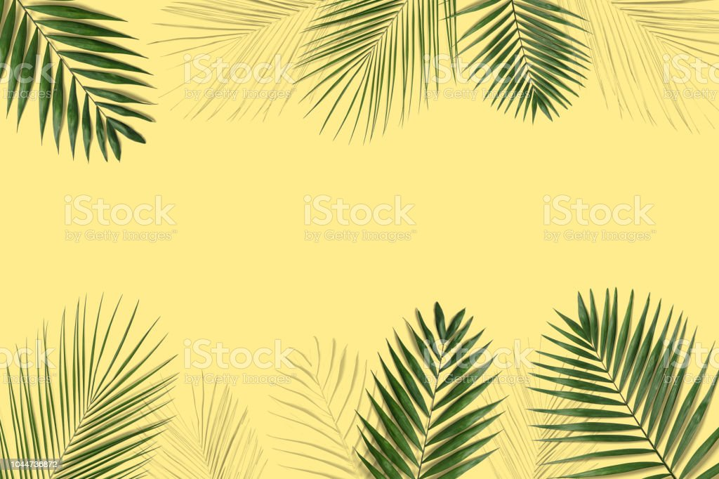 Tropical palm leaves on yellow background for design stock photo
