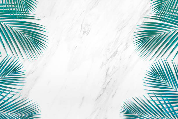 Tropical palm leaves pattern with marble copy space background picture id1165052016?b=1&k=6&m=1165052016&s=612x612&w=0&h=rnokbhta cmcxtead pjetx4htoqv9 mc7q8cqnr t4=