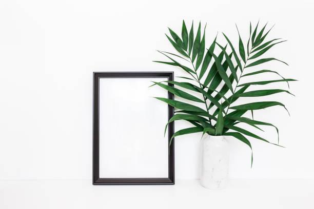 tropischen palmblätter, fotorahmen auf weißem hintergrund - schöne bilderrahmen stock-fotos und bilder