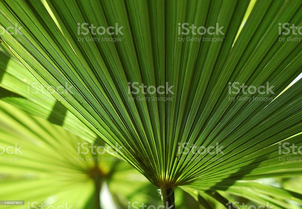 Tropical palm leaves royalty-free stock photo
