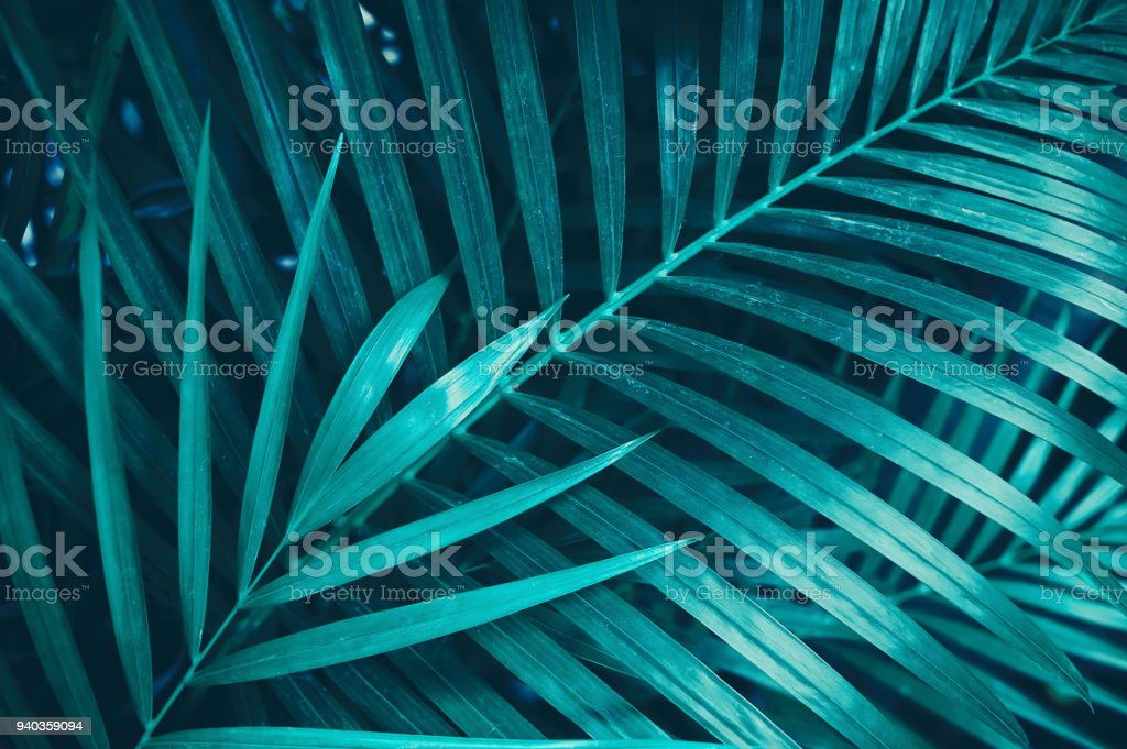 tropical palm leaves stock photo