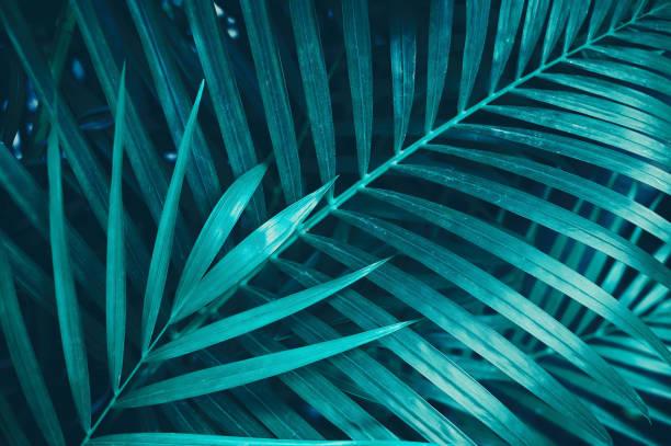 熱帯のヤシの葉 ストックフォト