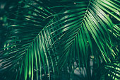 istock tropical palm leaves 942130900