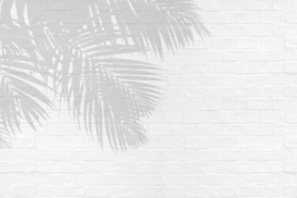 熱帯のヤシは、白いレンガ壁テクスチャ背景の影を残します。 ストックフォト