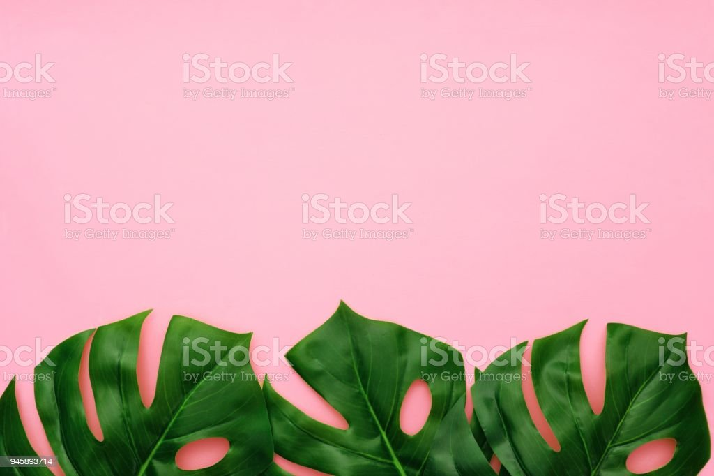 Tropical palm leaves top view bottom border on a pink background stock photo