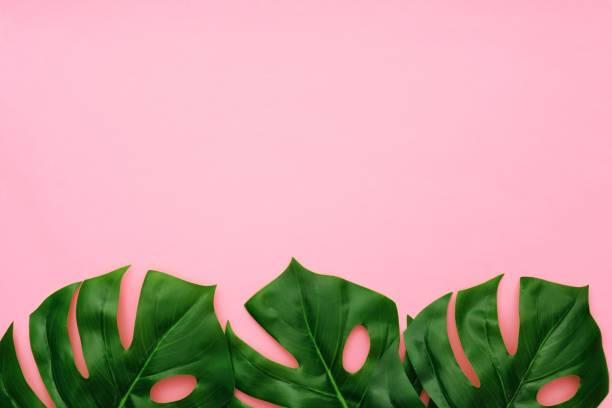 palmiers tropicaux quitte la bordure inférieure vue de dessus sur un fond rose - motif tropical photos et images de collection