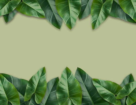 Tropical palm leaves with empty paper.