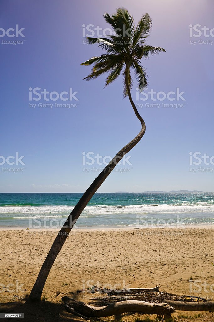 Tropical Palm royalty-free stock photo