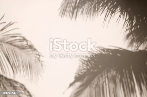 Shadows of palm trees make a tropical paradise out of a plain white wall