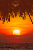 tropical palm tree and beautiful sea at sunset
