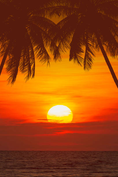 tropical palm tree and beautiful sea at sunset tropical palm tree and beautiful sea at sunset sunset stock pictures, royalty-free photos & images