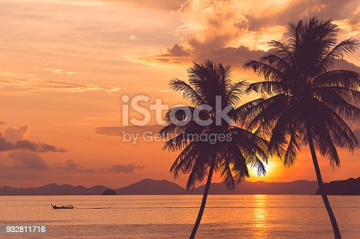 tropical palm tree at sea and sunset summer background