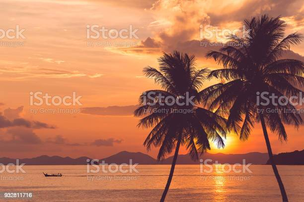 Tropical palm tree at sea and sunset summer background picture id932811716?b=1&k=6&m=932811716&s=612x612&h=4rmvhyq49xqs8i4lg7iy4lkoumxjtpngqivlizs7ahs=