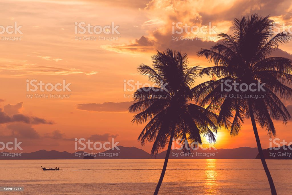 tropical palm tree at sea and sunset summer background stock photo