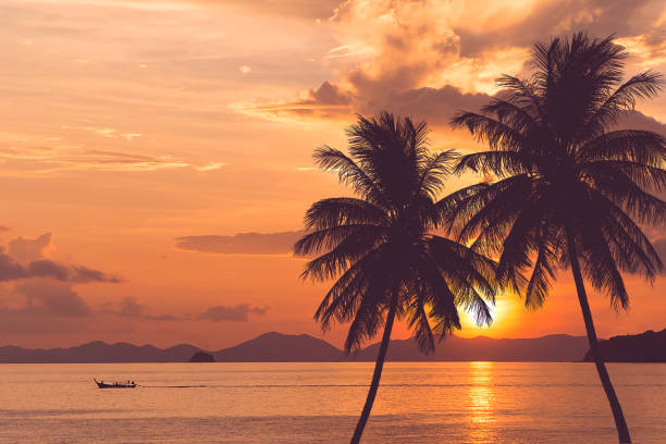 tropical palm tree at sea and sunset summer background - beach stock pictures, royalty-free photos & images