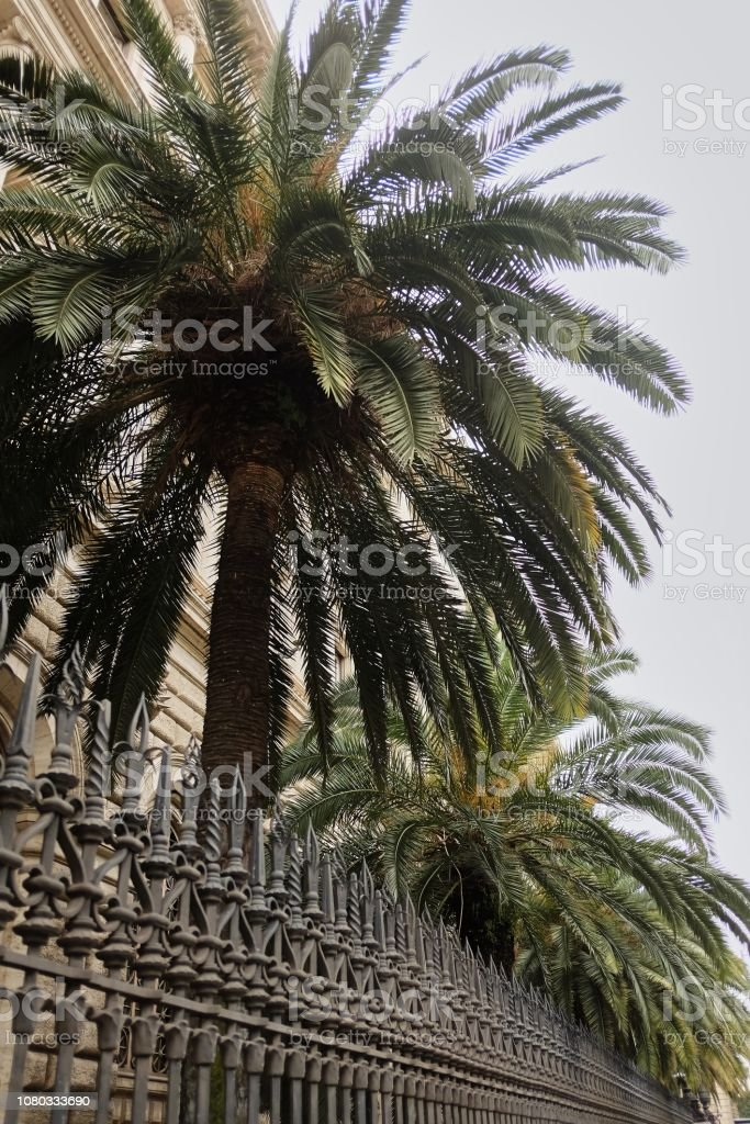 Tropical palm tree behind a high metal fence, bottom view, bright sky background stock photo