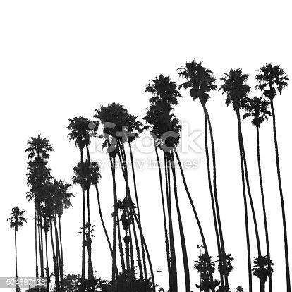 Tropical palm tree on Venice beach - los angeles
