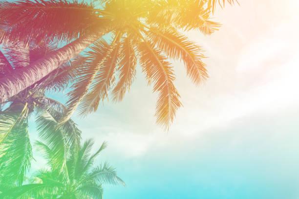 熱帶棕櫚樹與五顏六色的 bokeh 陽光在日落天空雲彩抽象背景。暑假與自然旅遊冒險的概念。復古色調濾鏡效果顏色樣式。 - 熱帶式樣 個照片及圖片檔