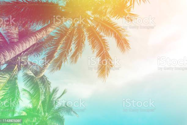 Photo of Tropical palm tree with colorful bokeh sun light on sunset sky cloud abstract background. Summer vacation and nature travel adventure concept. Vintage tone filter effect color style.