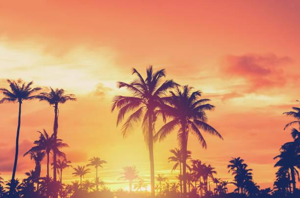 Tropical palm tree with colorful bokeh sun light on sunset sky cloud picture id1157503972?b=1&k=6&m=1157503972&s=612x612&w=0&h=sxpdwxk0zouz dxvlkgaoog5kuud2dx9blnm8ymj3 k=