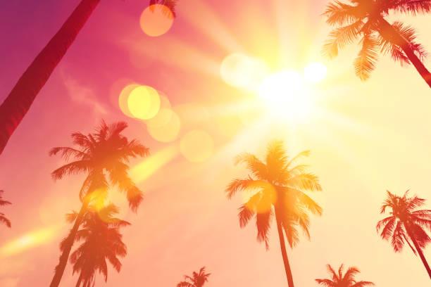 Tropical palm tree with colorful bokeh sun light on sunset sky cloud picture id1190190215?b=1&k=6&m=1190190215&s=612x612&w=0&h=5s5pokvneo6xvnnquxl8afcolkvcdc v9gfvjlllvdq=