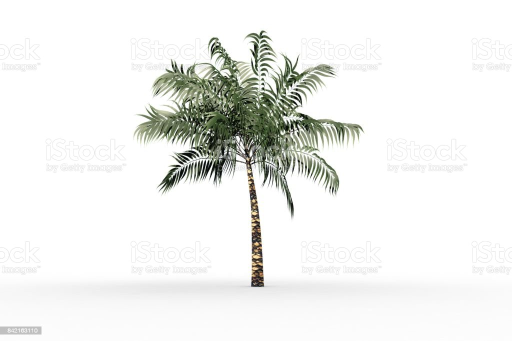 Tropical palm tree with green foilage stock photo