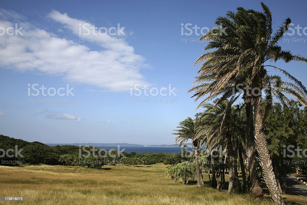 Tropical Palm Trees and Meadow stock photo