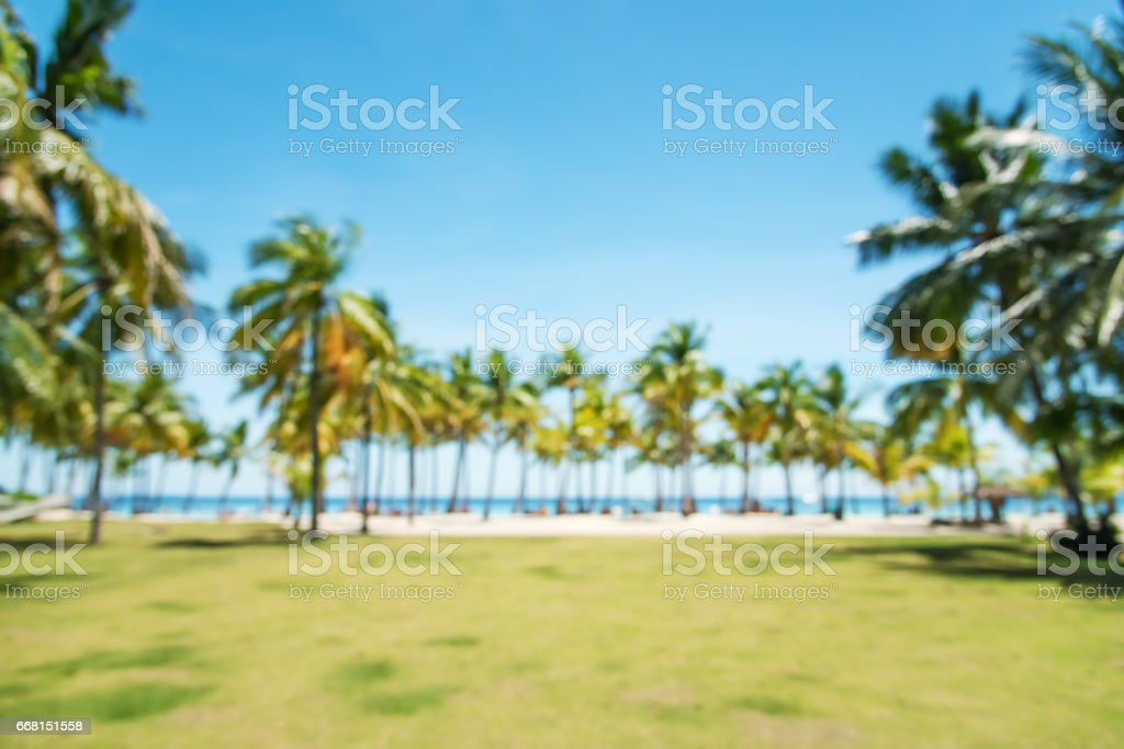 Tropical palm trees  blurred abstract background - foto de acervo